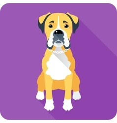 Dog boxer icon flat design vector
