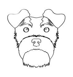 isolated schnauzer avatar vector image