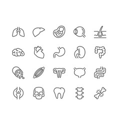 line organs icons vector image