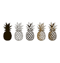set of pineapple fruits vector image