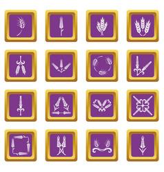 Ear corn icons set purple square vector