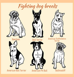 fighting dogs breeds - set on white vector image