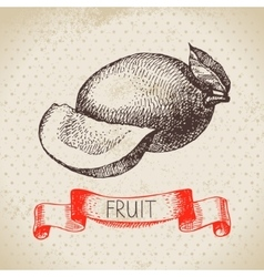 Hand drawn sketch fruit mango Eco food background vector