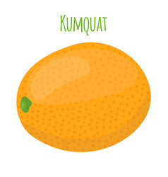 Kumquat exotic fruit cartoon flat style vector