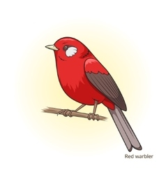 Red warbler bird educational game vector