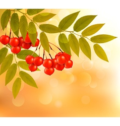 Autumn background with leaves and rowan Back to vector image vector image