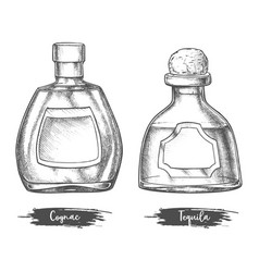 alcohol drink bottles sketch cognac and tequila vector image
