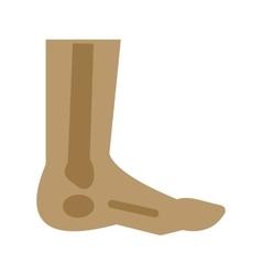Foot Skeleton vector