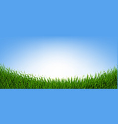 Green grass border and isolated blue background vector
