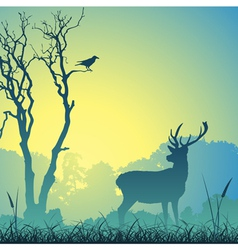 male stag deer vector image