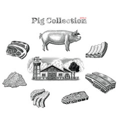 Pig collection hand draw vintage engraving style vector