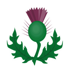thistles with green leavesmedicinal plant of vector image vector image