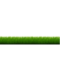 Green grass border and white background vector