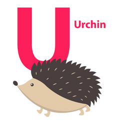 barbed cute urchin on alphabet poster character u vector image vector image