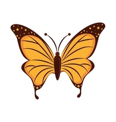 Butterfly animal insect wing vector
