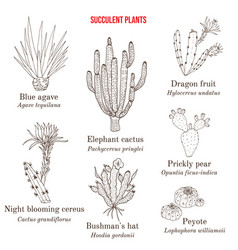 Medicinal and edible succulent plants collection vector