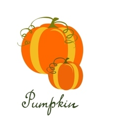 Pumpkin vegetable isolated on vector
