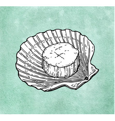 Scallop ink sketch vector