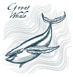 Great Whale vector image