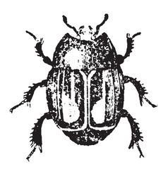 Mimic beetle vintage vector