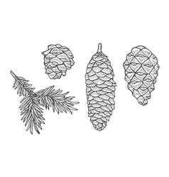 pine cone and fir tree set vector image