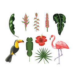 set toucan with flamingo and tropical leaves vector image
