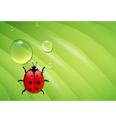 ladybug on wet leaf vector image vector image