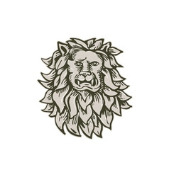 Angry Lion Big Cat Head Etching vector image vector image