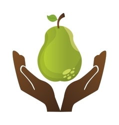 fresh pear farm product vector image