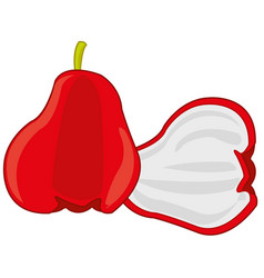 Fruit chompu on white background is insulated vector