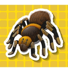 Poisionous spider on yellow background vector