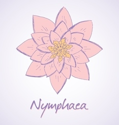 sketch of Lily Nymphaea vector image