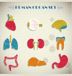human internal organs set vector image