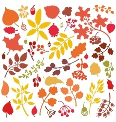 Autumn leavesbranchesberries setFall silhouette vector image