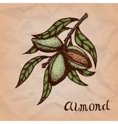Colorful of almond nuts vector