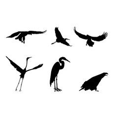 eagle and stork vector image
