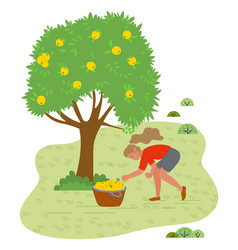 Girl picking fresh yellow apples from grass vector