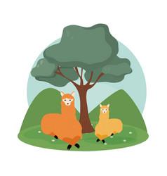 Llamas cute animals cartoons vector
