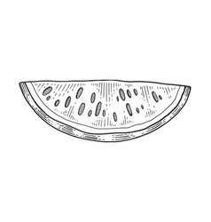 watermelon sketch engraving vector image