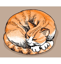 Sleeping red cat vector image vector image