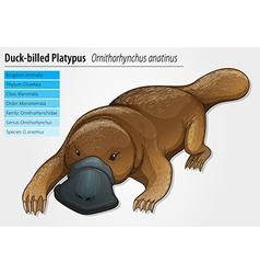 Duck-billed platypus vector