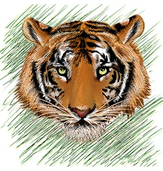 The tiger sketch vector