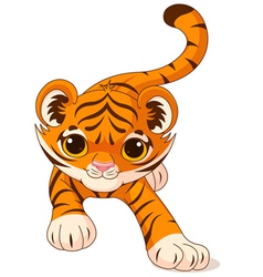Crouching baby tiger vector image vector image