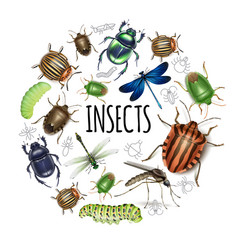 realistic insects round concept vector image