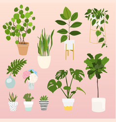 set of decorative house plants flowerpot isolated vector image