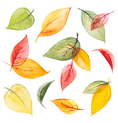 set watercolor isolated autumn leaves vector image