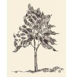Young tree vintage hand drawn sketch vector image