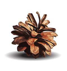 brown pine cone isolated on vector image