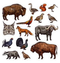 hunting sport animals and birds sketches vector image