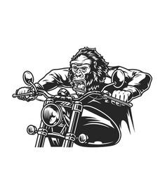Vintage cruel gorilla head moto rider vector